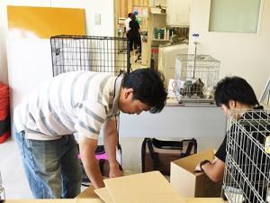 飼い主が見つかった猫を持ち帰るためのケースを組み立てる老松さん。
